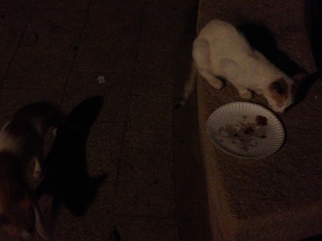 Lesson Learned: Don't set your food down for a second, otherwise the cats get it :)
